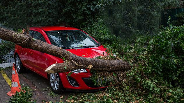 Sturmschaden: Ein Baum ist auf ein Auto gefallen
