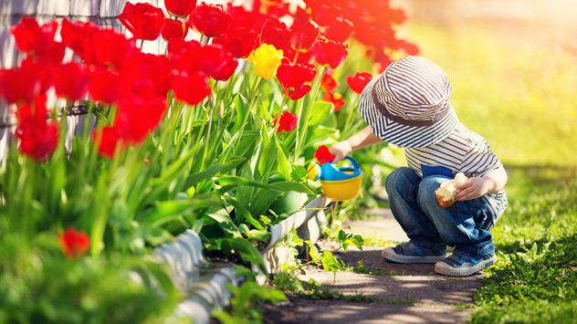 Ein Kind gießt Tulpen im Blumenbeet