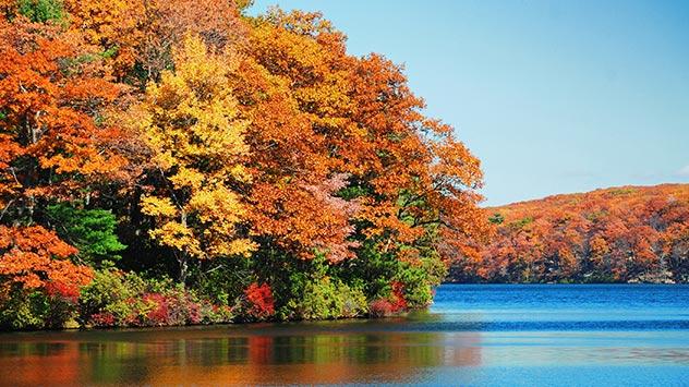 Wintervorbereitung: Ab September färben sich die Blätter der Bäume bunt.
